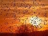 Fugle dækker solen