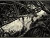 img_4594-vraget bil ved Sjelle